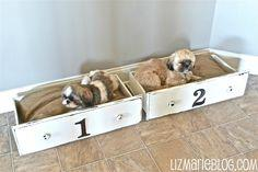 perfect use for old drawers.....beds for small dogs or cats