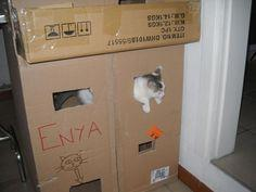 Cat Castle (quick and easy)