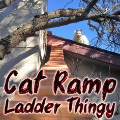 Cat Ramp Ladder Thingy
