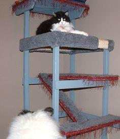 Woodshop Projects - Multi-level Cat Condo