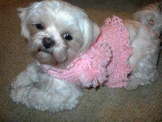 100 Crochet Dog Sweater Patterns At Dogcatpin Com
