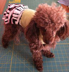 How to Make a Sweater Dress for Your Dog ... From Your Old Sweater!