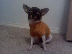 Darby's Cabled Sweater Pattern (Chihuahua Sweater)