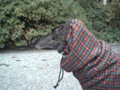 Hooded Hound Coat Instructions