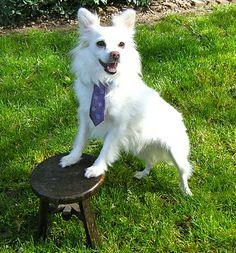 Easiest Upcycled Dog TIE Ever!!!