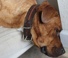 upcycle a belt into a dog collar