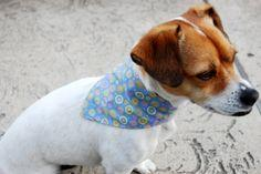 reversible dog bandana easter craft how to pet project