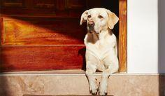 Teaching your dog how to open and close doors