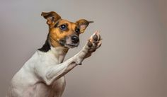 Teaching your dog to high five