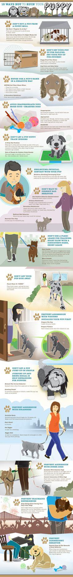 Train your puppy right!