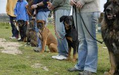 4 Valuable Dog Obedience Training Tips