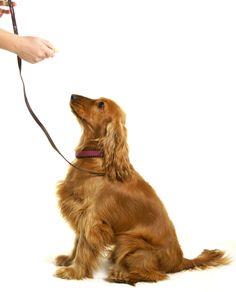 Easy Dog Obedience Training Tips