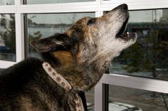 Tips On How to Stop Barking Dogs