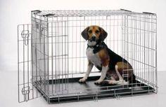 Basic Tips on How to Crate Train a Dog