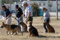 Tips on How to Do Schutzhund Dog Training