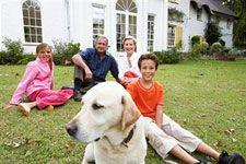 Training a dog to behave when guests visit