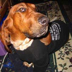 Converting a T-Shirt from Human to Canine…