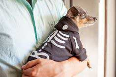 How to Dress a Dog as a Skeleton