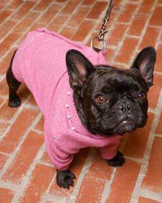 Wool Cardigan Dog Coat