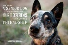 quotes on dogs friendship