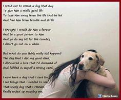 quotes on dogs unconditional love