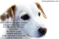 dog is your forever friend
