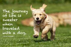 dog inspirational quote