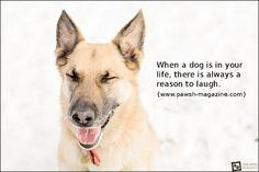 dog quotes - laughter