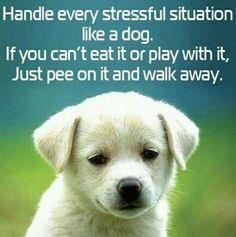 Handle every stressful situation like a dog.