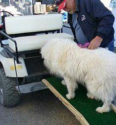 DIY Dog Ramps for Cars