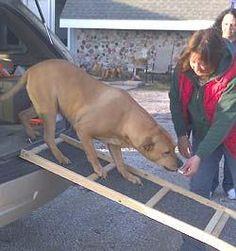 Help A Gimpy Dog U2026 Build A Dog Ramp... Quick U0026 Cheap.