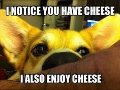 Cheese?