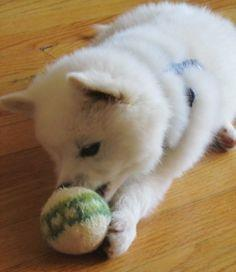 Indy's Ball (A Knit Dog Toy)