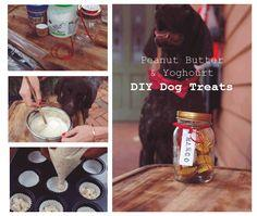 DIY – Yoghurt and peanut butter dog treat