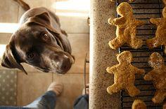 Pumpkin and Peanut Butter Dog Treats