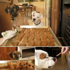 Sharing The Love #5 – Homemade flax seed dog biscuits