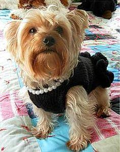 'Little Black Dress With Pearls' Dog Sweater