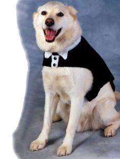 Tuxedo and Tails Dog Sweater pattern