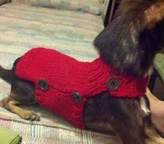 Side Button Dog Sweater