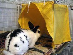 Rabbit or cat tent